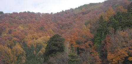 JR磐越西線沿線の紅葉