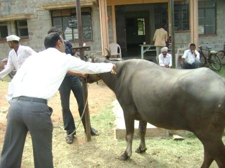 animal3_20111007.JPG